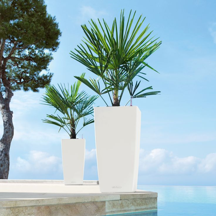 Square Lechuza Cubico Self-Watering Resin Planter - Attention, travelers who love plants: the Square Lechuza Cubico Self-Watering Resin Planter is the answer to your plant maintenance problems. Desi...
