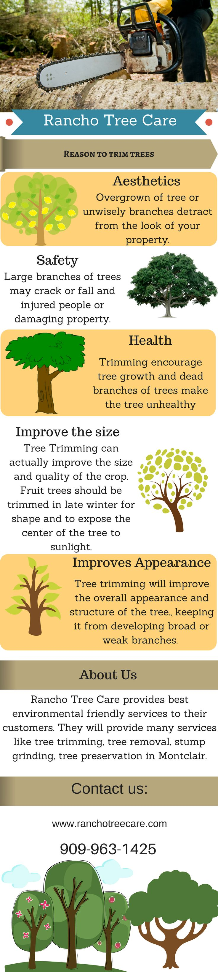 Excellent Tree Trimming & Tree Removal Services in Montclair