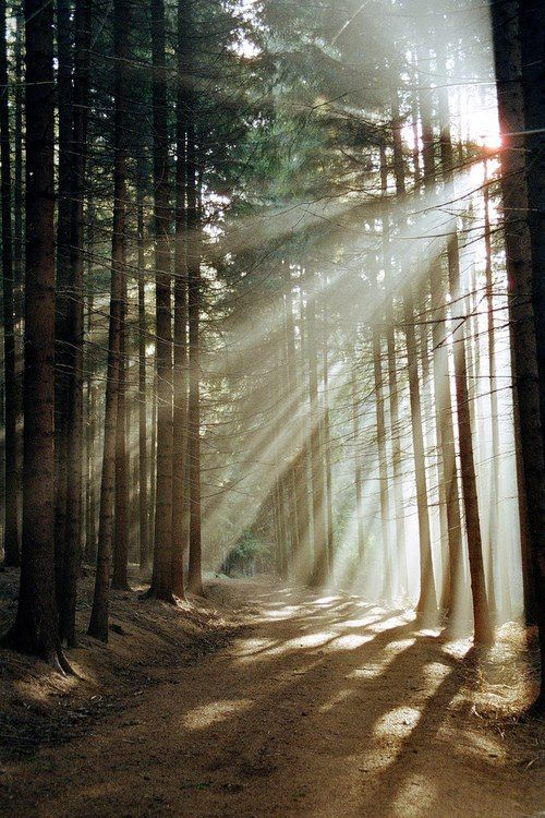 Walks in a forest where sunlight filters through the trees, pine needles crunch underfoot and fresh smell of moss and moisture!