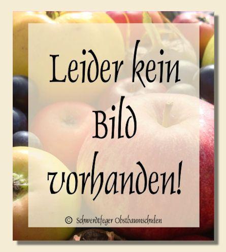Ihr Obstbaum-Shop! Alte Obstsorten - Alte Apfelsorten - www.alte-obstsorten-online.de - Zwetschgenbaum, Zwetschge 'Schönberger Zwetschge' - Zwetsche