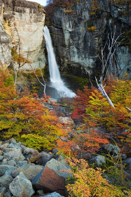 ˚The Chorrillo del salto waterfall surrounded by autumn colors . Los Glacieres National Park ARGENTINA