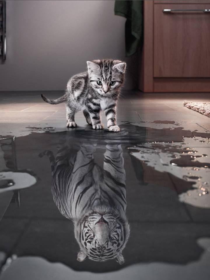 Pingl par caroline la maligne sur les chats pinterest for Miroir des chats