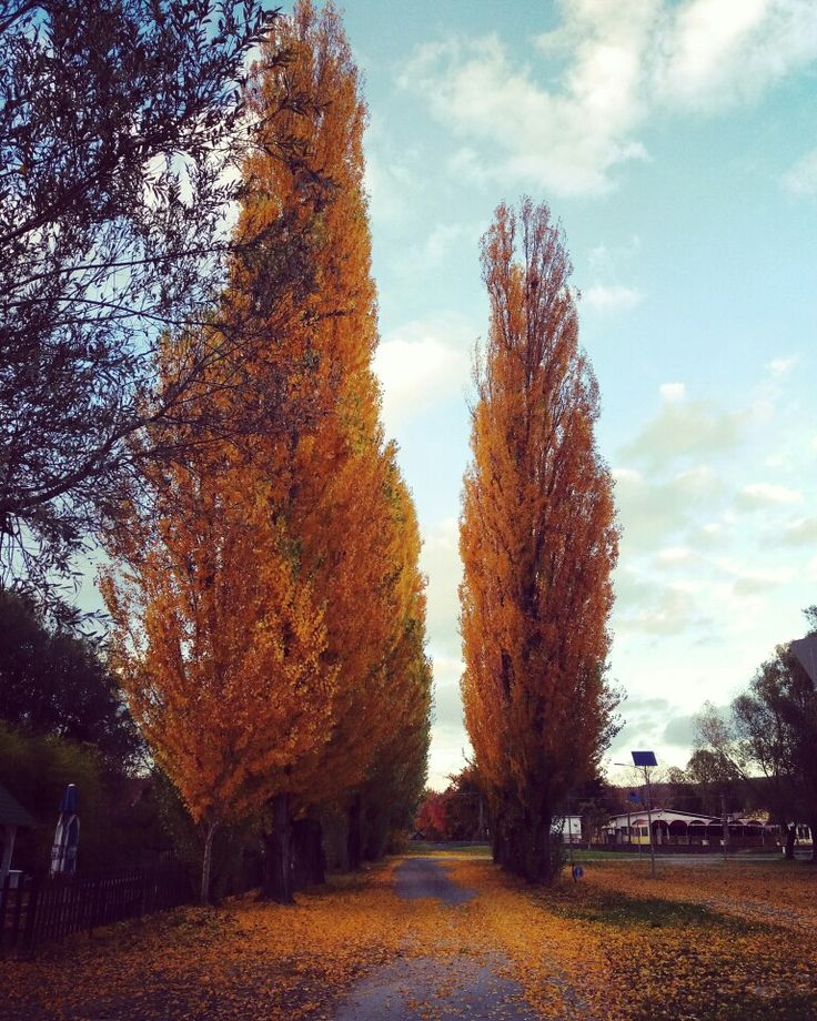 Autumn, Vonyarcvashegy, Balaton