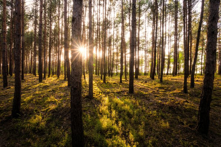 Sunset in the forest by Daniel Ciesielski on 500px