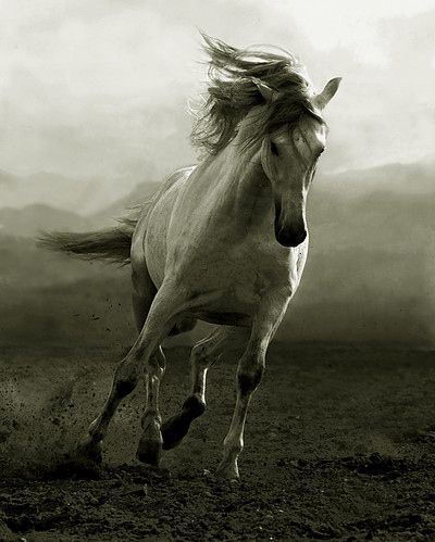 black and white with color animal photography | animal, black and white, horse…