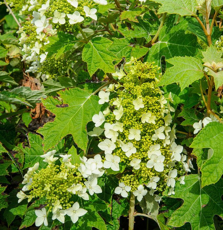 15 impossibletokill outdoor plants plants outdoor