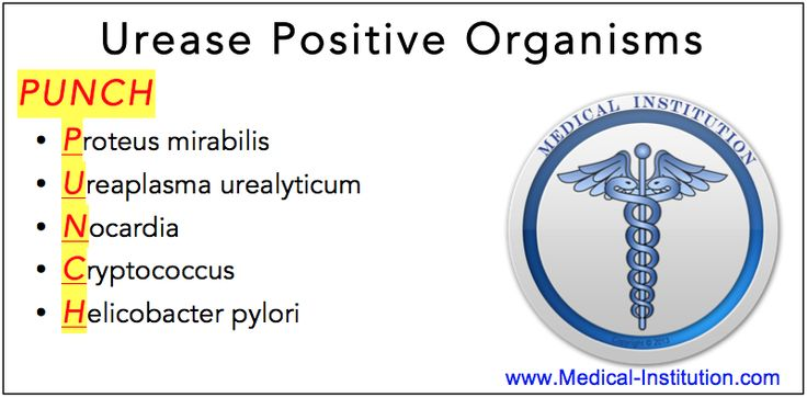 Urease Positive Organisms Mnemonic  - USMLE Mnemonics, Medical Mnemonics, nursing mnemonic, #COMLEX #USMLE #DAT #MCAT #Medicalschool #Nursingschool #NCLEX #microbiology