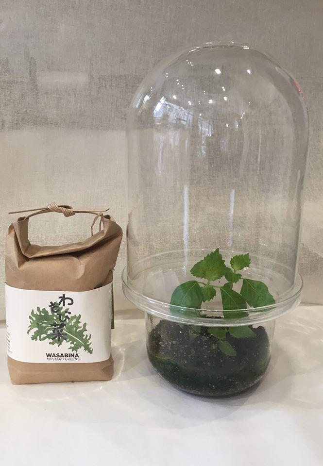 Le sachet contient un mélange de terreau et de graines, prêt à l'emploi. Plantez et vous obtiendrez des salades à déguster!