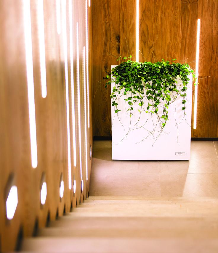 STEEL PLUS WHITE by Hobby Flower www.hobbyflower.com