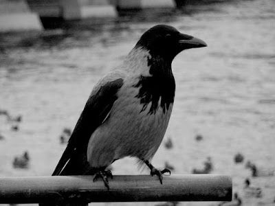Matkojeni blogi: Lintuja ja siltoja, Tukholmassa