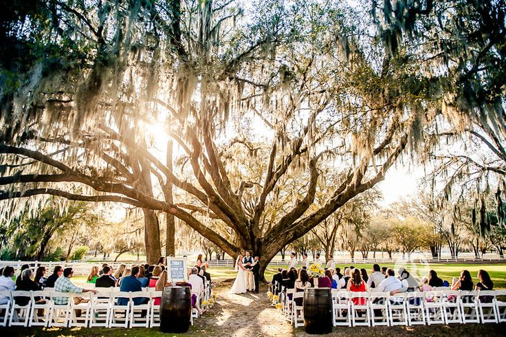 Outdoor ceremony in front of big tree | Peter & Amber's Lange Farm Wedding | Tampa, FL | Elizabeth Davis Photography | Click here to see the whole amazing wedding: http://elizabethdavisphotoblog.com/peter-amber-lange-farm-wedding-tampa-fl/