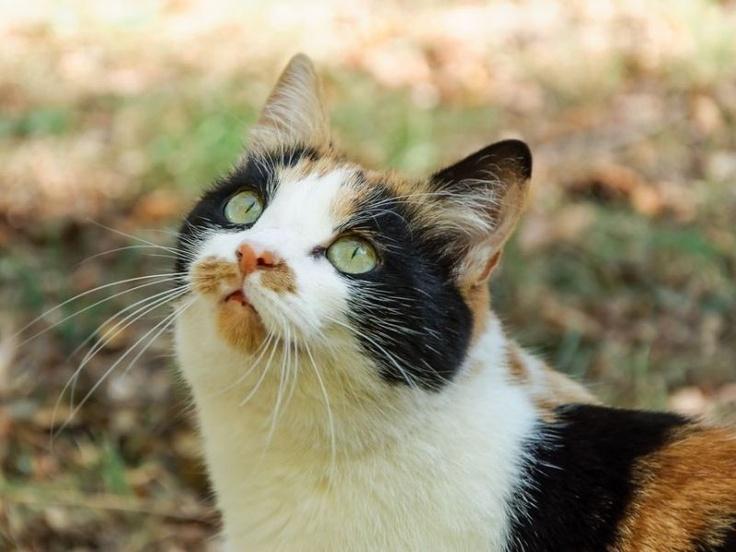 """Einer der beliebtesten Katzennamen für kleine Stubenlöwen ist """"Leo""""    www.einfachtierisch.de"""
