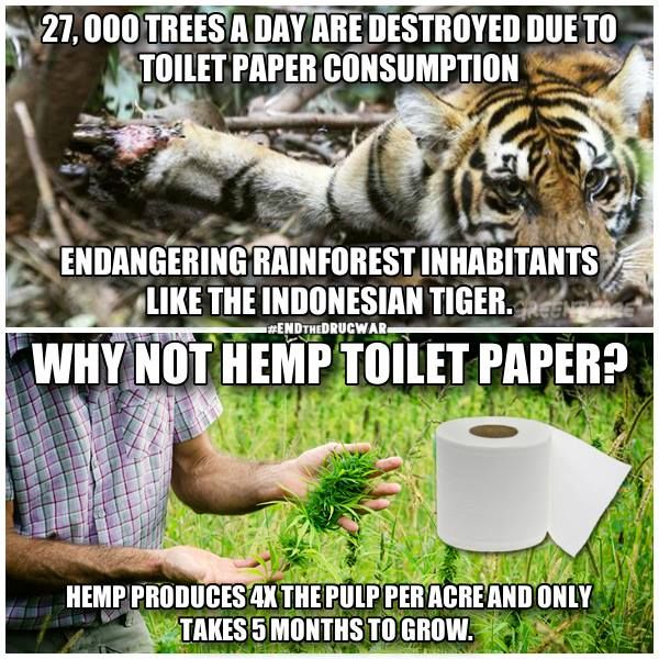 27,000 trees a day are destroyed due to toilet paper consumption, endangering rainforest inhabitants like the Indonesian tiger. Why not use Hemp toilet paper? Hemp produces 4 times the pulp per acre and only takes 5 months to grow.