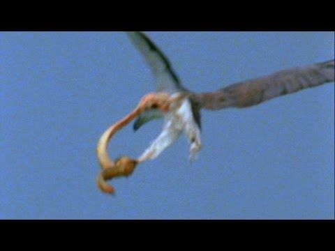 ▶ World's Deadliest - Eagle vs. Toxic Snake - YouTube