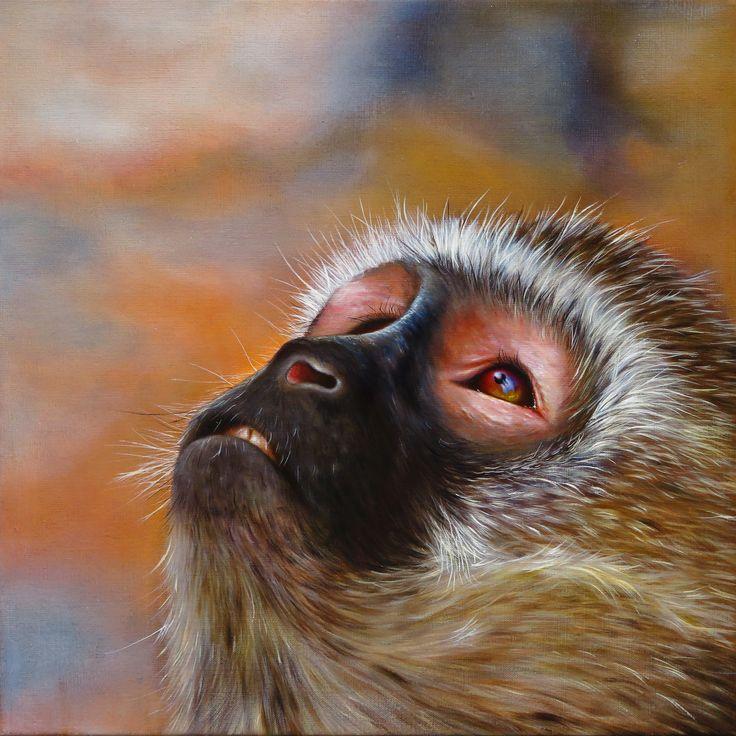 STARGAZER - Vervet monkey, oil on canvas, 50x50