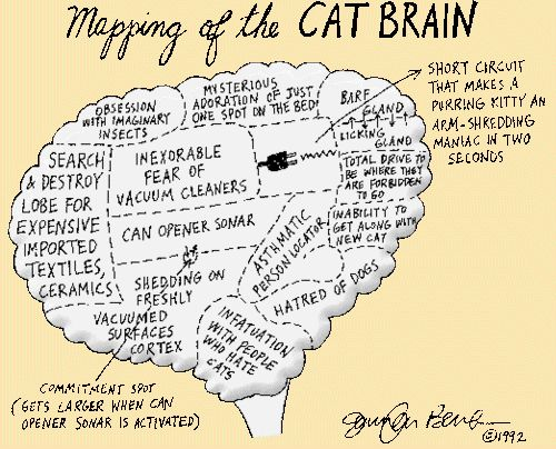 These Cat Anatomy Illustrations Will Help You Get To Know Your Cat Better
