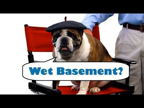 Best Of Busy Dog Basement Technologies