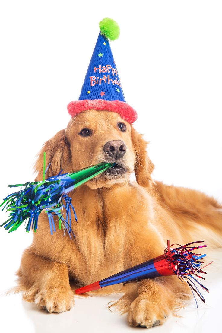 Do you host a birthday gathering for your dog? This is something that the kids will love doing! For some dog lovers this is a big deal. Our dog is a big part of our family. He goes with us on the r…