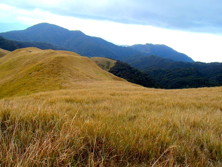 Grassy Splendor at Mt. Pulag, Benguet, Philippines
