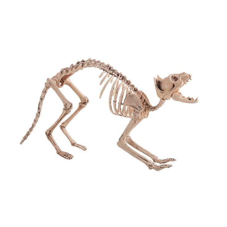 Esqueleto Gato 60X25 cm.