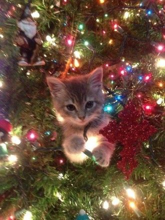 pretending to be an ornament, so cute!