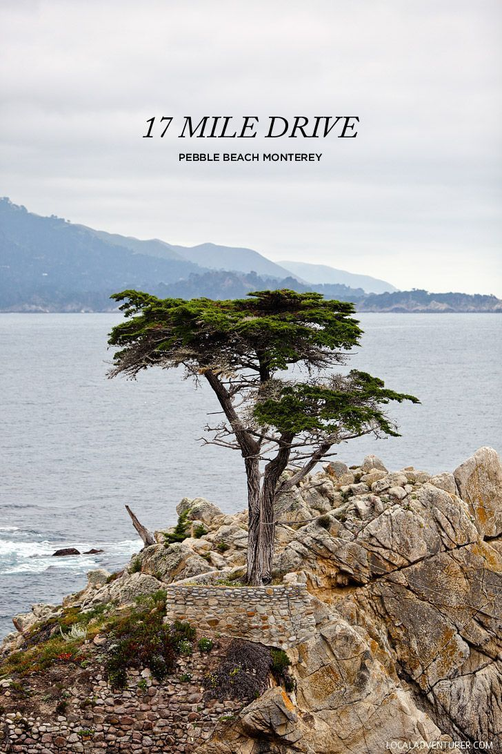 Guide to the Beautiful and Famous 17 Mile Drive Monterey County // http://localadventurer.com