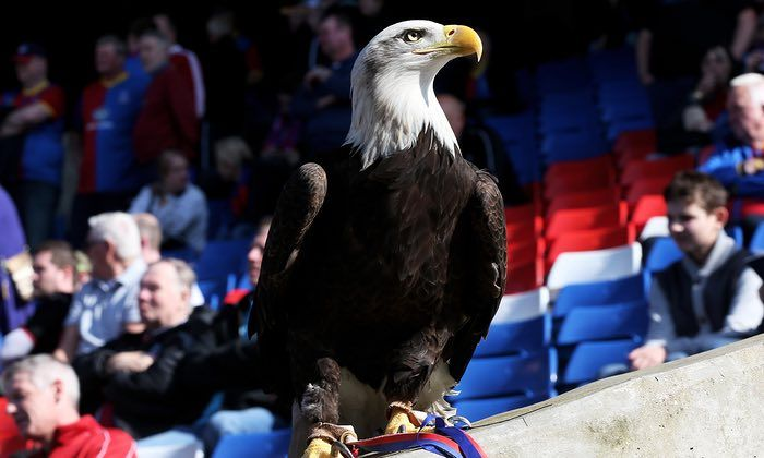 A Charlton Athletic supporter has been found guilty of trying to punch Crystal Palace's American bald eagle mascot at a cup tie marred by crowd trouble. A jury at Croydon crown court found Daniel Boylett, 36, of Eltham, south east London, guilty of attempted damage in the attack on Kayla, a 25-year-old bird of prey who Palace adopted as their mascot in 2010.