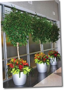 22 best images about office plants on pinterest office Best small office plants