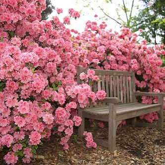 Landscape Ideas Pink Roses Behind A Simple Garden Bench