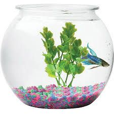 How To Decorate Fish Bowl 53 Best Reference For Fish Bowl Shot Images On Pinterest  Fish