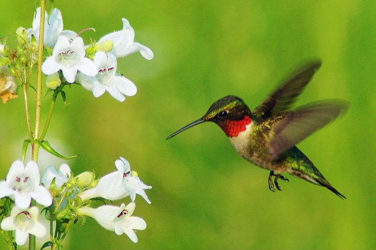 Hanging Flower Baskets That Attract Hummingbirds : Best attracting hummingbirds images on