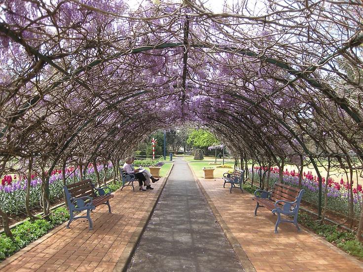 Wisteria tunnel at Laurel Bank Park, Toowoomba, Australia