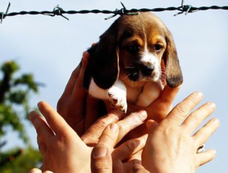 Subsonica per cani Green Hill: brano 'Liberi tutti' dedicato ai beagle. Il video da condividere