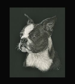 Boston Terrier -  This is the actual size of the scratch art. This size is intended as example of a memorial for an urn. Smaller work can easily be done for a pendant or jewellery.  I can work from a photo. A web site dedicated to this is planned. In the mean time I can be contacted at sue@suewalters.com #bostonterrier