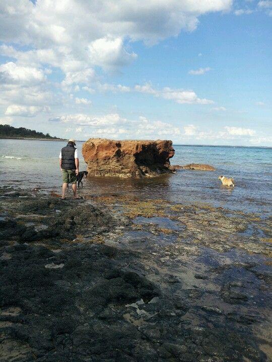 Beautiful day at Shoreham, Mornington Peninsula
