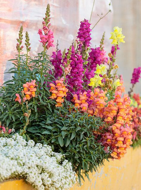 Cómo elegir las mejores plantas de exterior para tu balcón o terraza - Foto 3 Small Gardens, Quesadillas, Queso, Interior, Aesthetics, Container, Gardens, Sun, Shade Plants