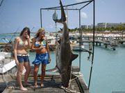 Абсолютный хищник – акула, стоящий в самом конце длинной пищевой цепочки, начинающейся с микроорганизмов, поэтому вам не стоит сильно беспокоиться: акулы в лагунах довольно малы и безвредны, и люди не являются их добычей.  лет назад, 12 из них – на Красные листы, так как находятся на грани исчезновения.