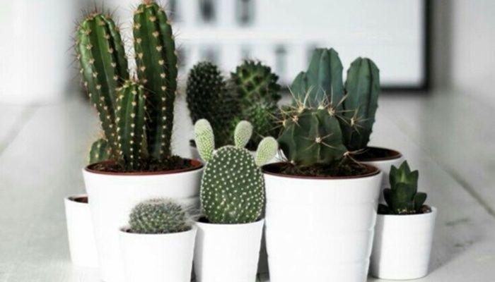 Une immense vente de cactus et de plantes aura lieu à Montréal!