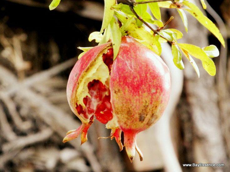 Granada means pomegranate | Granada, Spain | www.bayessence.com