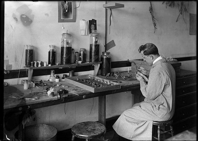 Milton Copulos, plant model maker | Flickr - Photo Sharing!