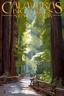 Calaveras Big Trees State Park - Pathway in Trees - Lantern Press Poster