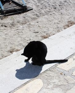 Cats of Nerja