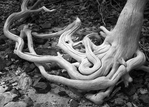 "Jeremy Barnard Snake Pit Artist's Archival Giclées from digital captures, 21x27"" frame size"