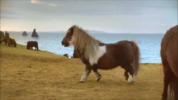 Three Dancing Pony - Goat Edition #DancePonyDance