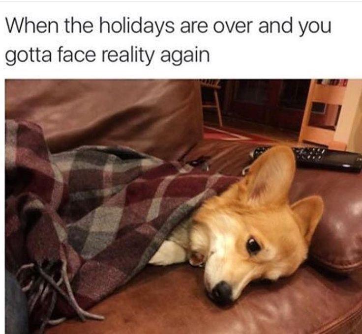#memes #holidays #holidaysgotmelike