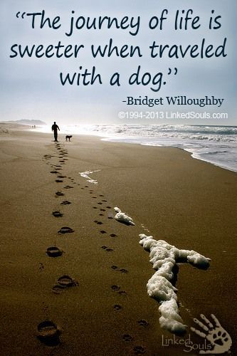 """The journey of life is sweeter when traveled with a dog."" Absolutely."