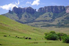 bethlehem south africa - Google Search  Free State