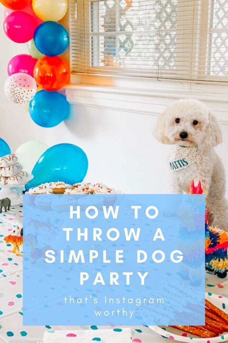 Throwing A Birthday Party Can Be Easy Fun In 2020 Best Dog
