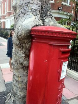 Hungry tree in Kensington,  London Thanks George We love your blog.