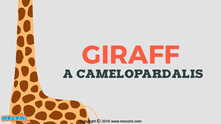 Read more interesting facts about #Giraffes and What does a Giraffe look like?. For more interacting #GK articles for kids, visit: http://mocomi.com/learn/general-knowledge/